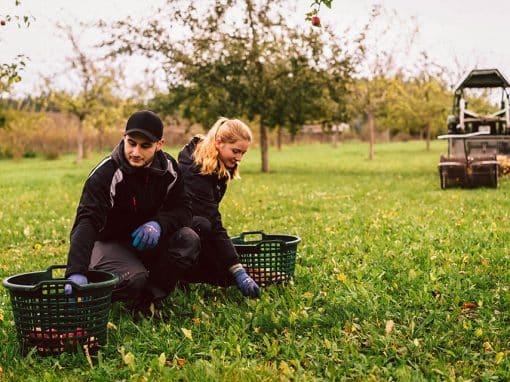 Monika und Hansi lesen Äpfel auf