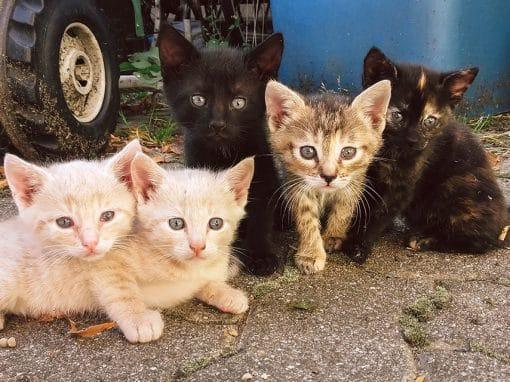 Katzenbabys auf Marias Hof