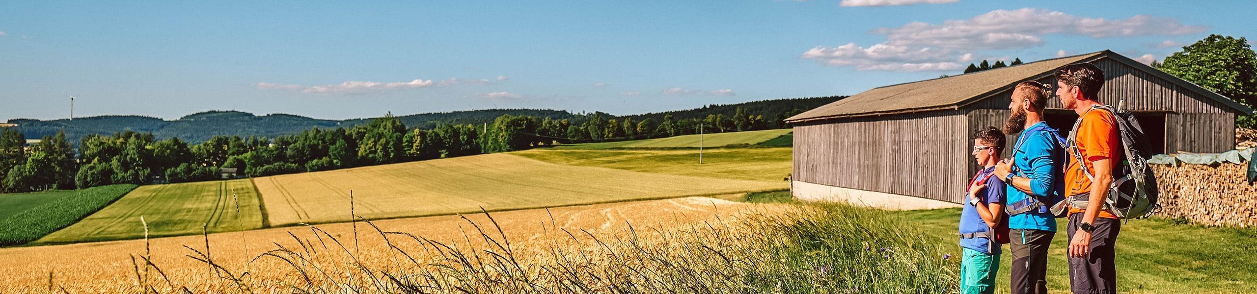 Goldenen Felder entlang des Nurtschweges bei Bärnau